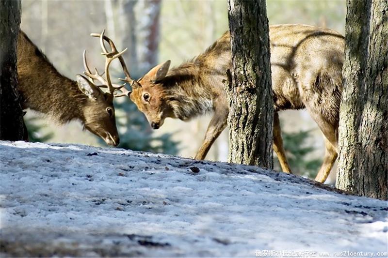 莫斯科郊区狩猎